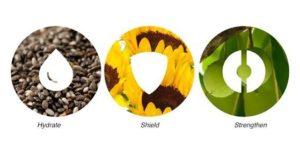 Plantaardige ingrediënten | Phyto Replenish Oil